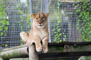 newquay-zoo-1