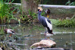 newquay-zoo-2