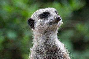 newquay-zoo-5