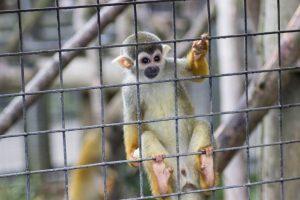 newquay-zoo-7